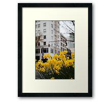 Portland Daffodils Framed Print