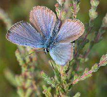 Blue butterfly by Judi Lion