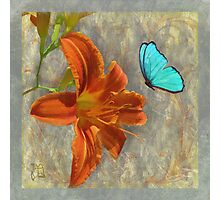 Afternoon in Tuscany, orange day lily aqua butterfly Photographic Print