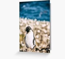 Sleepy Penguin - Falkland Islands Greeting Card