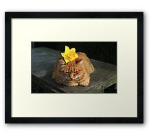Ginger cat playing with daffodil Framed Print