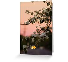 Spring Nights Greeting Card
