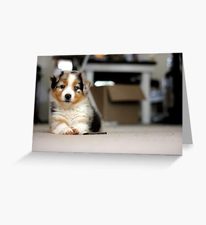 Australian Shepherd Puppy - Sam Greeting Card