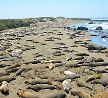 Elephant Seal Beach by Cathy Jones