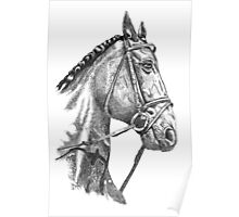 Fine line, hand drawn, Horse in Bridle Poster