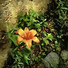 Bright Spot by RC deWinter