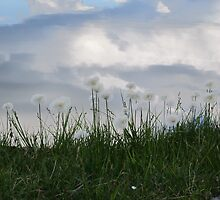 Cottongrass by Ethuil