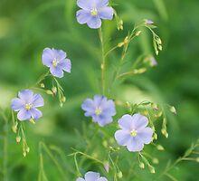 Purple Flax Blossoms greenery by kimberpix