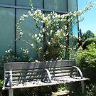 Syringa bench by MarianBendeth