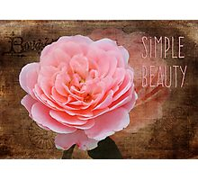 Simple Beauty in Pink Photographic Print
