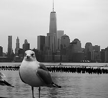 Jersey Gull / NYC by oldgreg