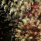 fireworks 1/7/16 by david gilliver