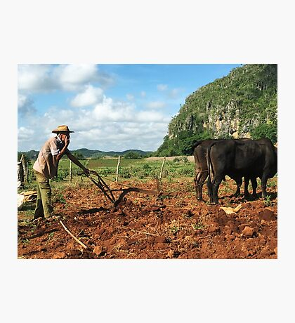 Tobacco Farmer with Ox Vinales Cuba Photographic Print