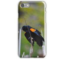 Black Bird iPhone Case/Skin