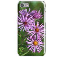 Purple Aster Blooms iPhone Case/Skin