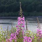 Willow Herb by liberthine01