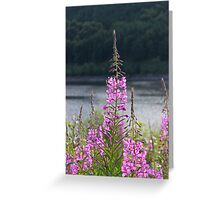 Willow Herb Greeting Card
