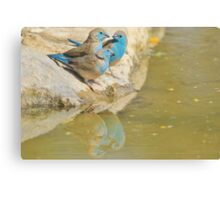 Blue Waxbill - Colorful Wild Birds from Africa - Brotherhood of Joy Canvas Print