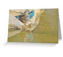 Blue Waxbill - Colorful Wild Birds from Africa - Brotherhood of Joy Greeting Card