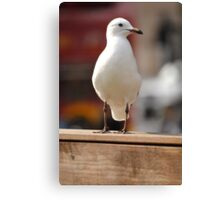 A Nice Photo Of A Seagull Canvas Print