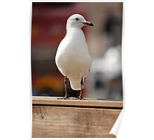 A Nice Photo Of A Seagull Poster