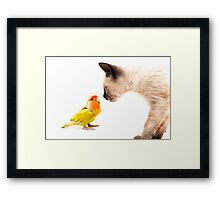 cat with colorful tropical agaporni Framed Print