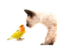 cat with colorful tropical agaporni Photographic Print