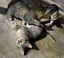 Convoluted Kitties by WildestArt