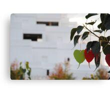 Wishing Tree/Praying Tree Canvas Print