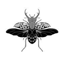 Stag Beetle Print Photographic Print