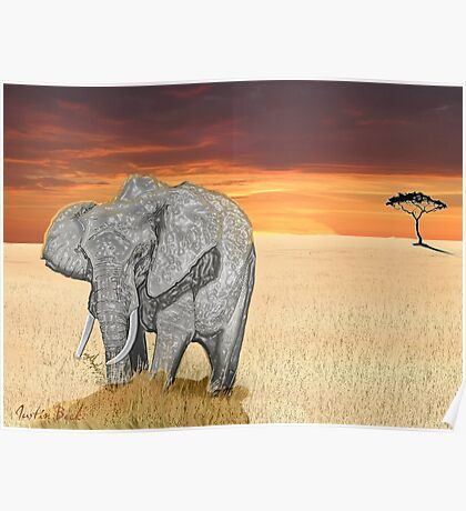Savana Elephant Justin Beck Picture 2015085 Poster