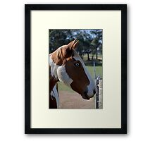 Moe Jingles-The Horse  Framed Print