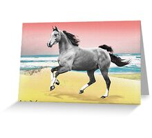 Beach Horse Justin Beck Picture 2015081 Greeting Card