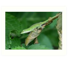 The Green Anole Art Print