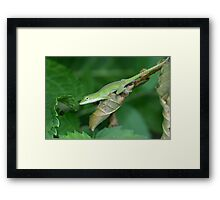 The Green Anole Framed Print