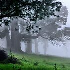 Foggy Wynstay - Mt Wilson NSW Australia by Bev Woodman