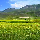 Flowering in Pian Grande by annalisa bianchetti