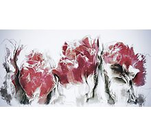 French Country Roses Photographic Print