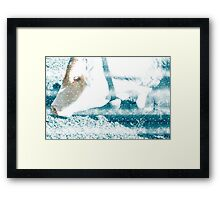 Cow with Bell. Photographed in Tirol, Austria Framed Print