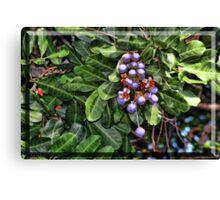 Faux Blueberries Canvas Print