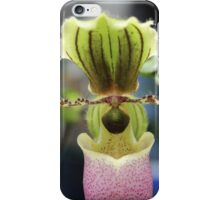 Paph Pinocchio ladyslipper orchid iPhone Case/Skin