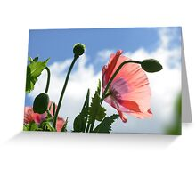 Poppy Flower Power Greeting Card