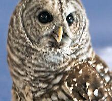 Barred Owl by Yukondick