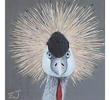 Bird Portrait - Crowned Crane Photographic Print