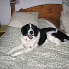 If you use the bed all night, can't I use it all day ? by Dennis Melling