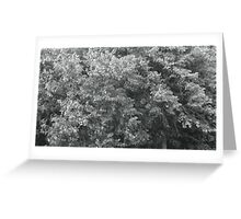 high wind in lime trees Greeting Card