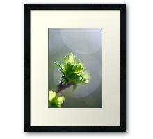 Grey, Green Bokeh Framed Print