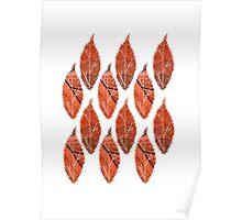 Red Leaf Pattern Poster