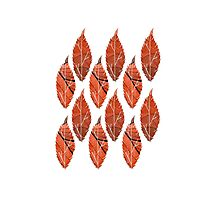 Red Leaf Pattern Photographic Print