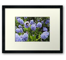Bee Kind To Bees Framed Print